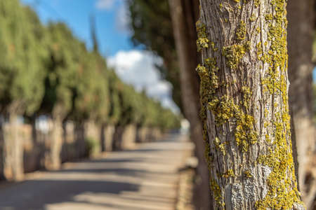 The road to Campos cemetery surrounded by cypress trees on a sunny day Stok Fotoğraf - 158926500