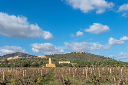 Vineyard with stone mill and mountains in the background on a sunny day on the island of Mallorca, Spain Stok Fotoğraf - 159178958