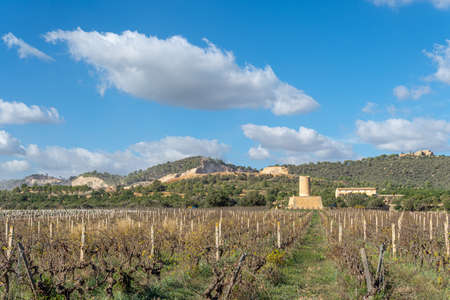 Vineyard with stone mill and mountains in the background on a sunny day on the island of Mallorca, Spain Stok Fotoğraf - 159178827