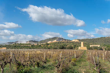 Vineyard with stone mill and mountains in the background on a sunny day on the island of Mallorca, Spain
