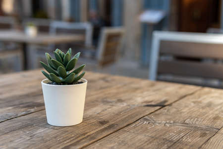Detail of a small green leaf plant decorating a cafeteria terrace table. Unfocused background of a cafeteria terrace