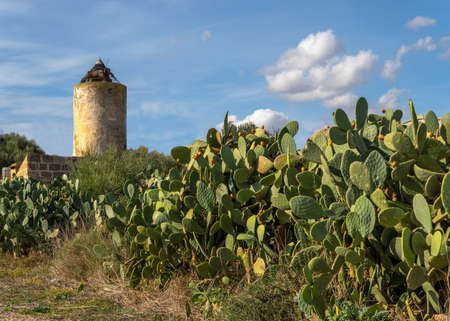 Abandoned and dilapidated windmill in a prickly pear field with prickly pears on a sunny day Stok Fotoğraf - 159520535
