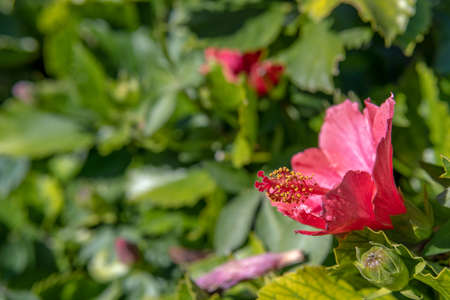 Very colorful red flower with an unfocused nature background with bokeh effect Stok Fotoğraf - 159557008