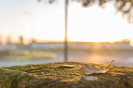 Close-up of an autumn leaf on top of a sculptured stone with moss at dawn Stok Fotoğraf - 159980293