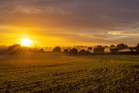 Sunrise with fog in a field with carob trees in the interior of the island of Mallorca, Spain Stok Fotoğraf - 160695140