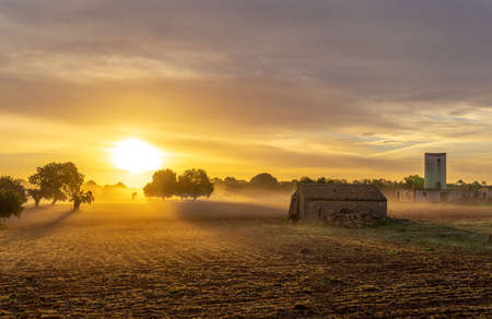 Sunrise with fog in a field with carob trees in the interior of the island of Mallorca, Spain Stok Fotoğraf - 160530924