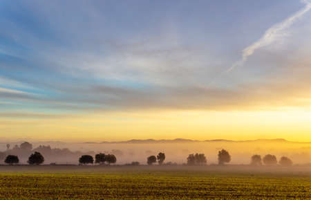 Sunrise with fog in a field with carob trees in the interior of the island of Mallorca, Spain Stok Fotoğraf - 160533703