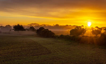 Sunrise with fog in a field with carob trees in the interior of the island of Mallorca, Spain Stok Fotoğraf - 160533625