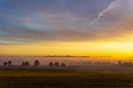 Sunrise with fog in a field with carob trees in the interior of the island of Mallorca, Spain Stok Fotoğraf - 160556071