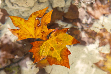Autumn leaves on water with leaves on the water bottom out of focus. Majorca island, spain Stok Fotoğraf