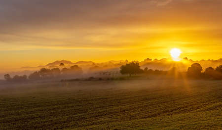 Sunrise with fog in a field with carob trees in the interior of the island of Mallorca, Spain Stok Fotoğraf - 161208384