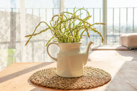 Wild green asparagus (Asparagus officinallis) in a white porcelain bowl decorating a rustic wooden table Stok Fotoğraf