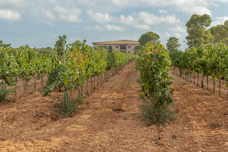 Llucamjor, Spain; September 11 2021: General view of the Vi Rei winery located in the interior of the island of Mallorca