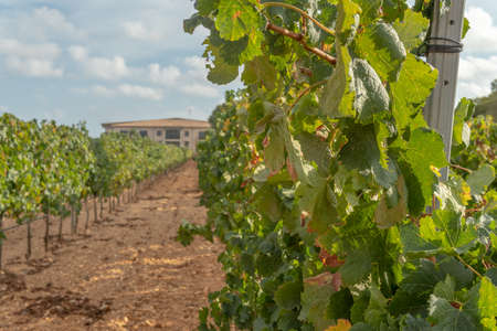 Llucmajor, Spain; September 11 2021: General view of the Vi Rei winery located in the interior of the island of Mallorca
