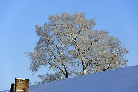 residental: The snow-covered roof of residental house and old snowy acacia against the blue sky at winter.