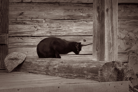 The black cat sitting alone on staircase of wooden house