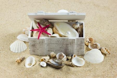 shells on sand. starfish. treasure photo