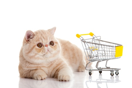trolly: persian exotic cat isolated with shopping trolly Stock Photo
