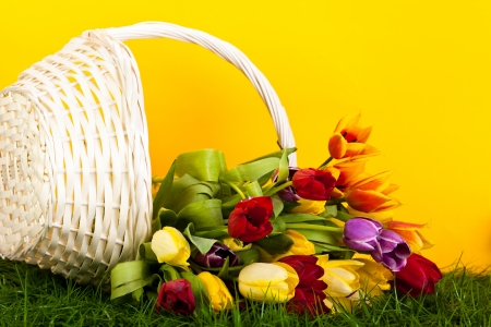 tulips in basket colors background. green gras photo