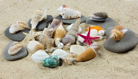 shells on sand  starfish  treasure photo
