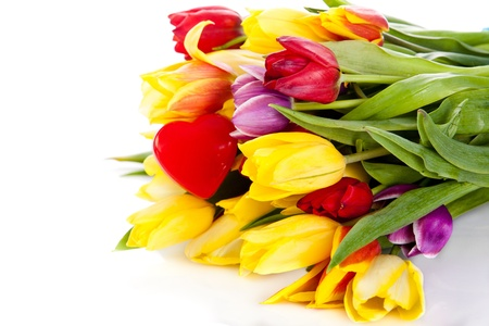 tulips isolated on white background. colors photo