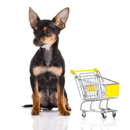 trolly: chihuahua with shopping trolly isolated on white background Stock Photo