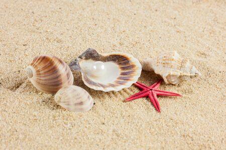 seashells und starfish on sand photo
