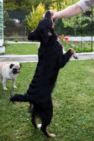react: Black dog react