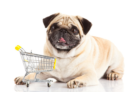 trolly: pug dog shopping trolly isolated on white . shopper