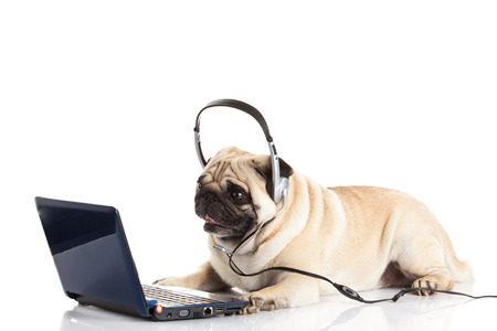 pug dog with headphone isolated on white call center photo