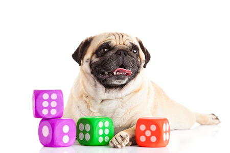 pug dog thread balls isolated on white background dices photo