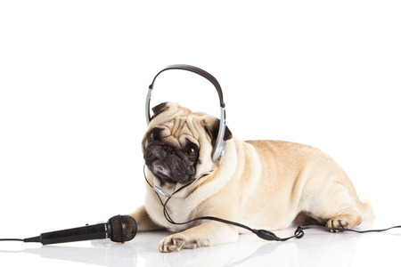 pug dog with headphone isolated on white background callcenter photo