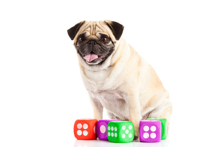 pug dog thread balls isolated on white dices photo