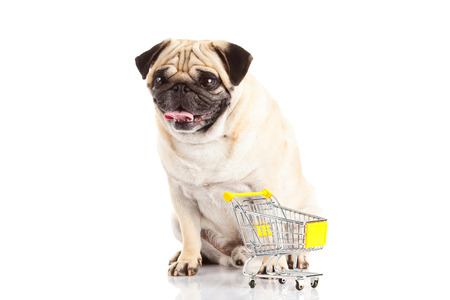 trolly: pug dog shopping trolly isolated on white shopper