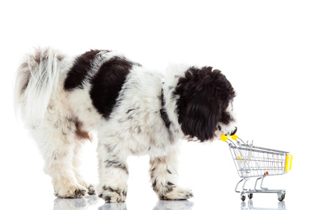 shih tzu: Shih tzu with shopping trolly  isolated on white background dog