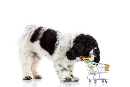 trolly: Shih tzu with shopping trolly  isolated on white background dog