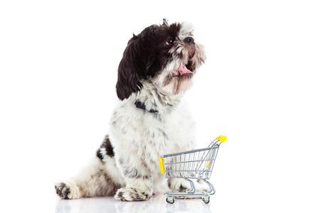 trolly: Shih tzu with shopping trolly  isolated on white background dog
