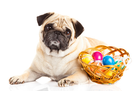 dog and easter eggs isolated on white background photo