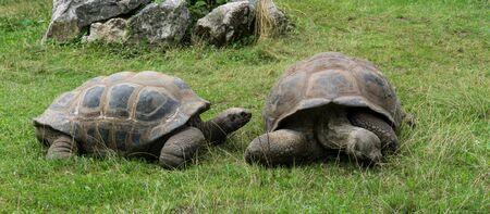 munch: turtle tortoises Stock Photo