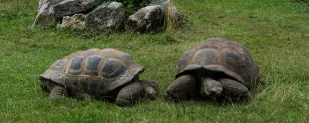 turtles love: turtle tortoises Stock Photo