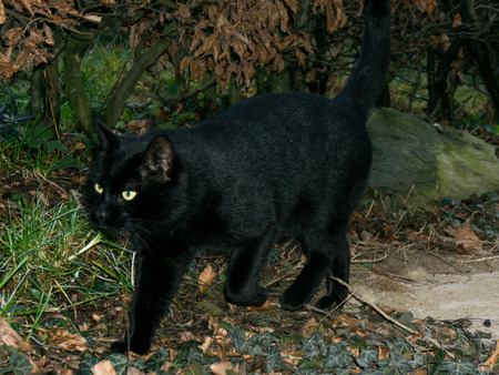 cosiness: black cat Stock Photo