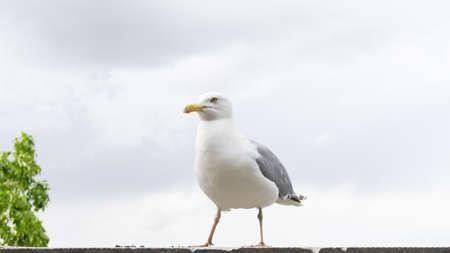 sea gull bird postcard