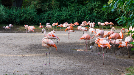 flamingos: flamingos are standing zoo in Prague