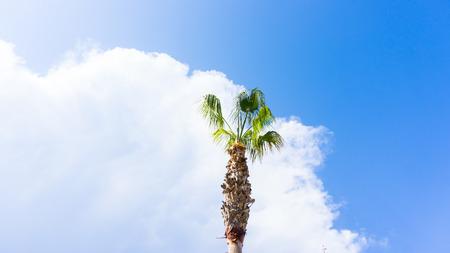 palm on blue sky. musts Stock Photo