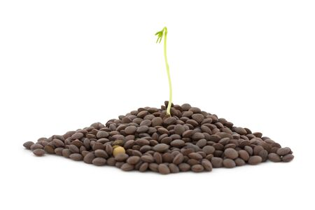 흰색 배경에 고립 된 식물 렌즈 콩입니다. 스톡 콘텐츠