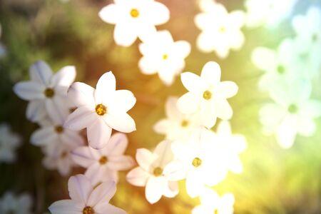 Flowers in spring. Light leak effect added.