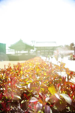 Red bushes with a japanese temple at background. Light leak effects added.