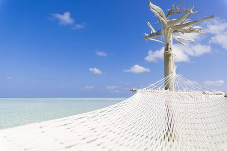 Hammock hold by white tree in a shallow and clear sea.