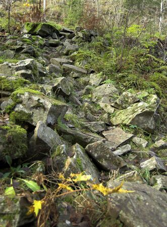 Moss-grown stones form a path leading uphill