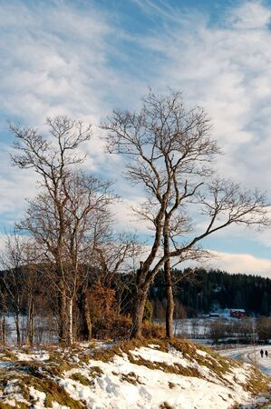 A cluster of trees on a small hillock, framed by a road, a forest and a sky with whisps of clouds. Losby, Norway.   Stock Photo